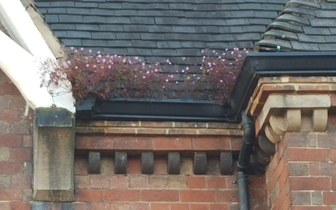 Why a warm Autumn could prove troublesome for gutters