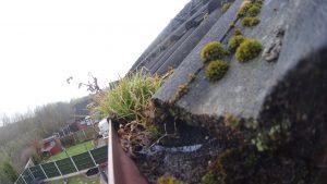 Moss in gutter