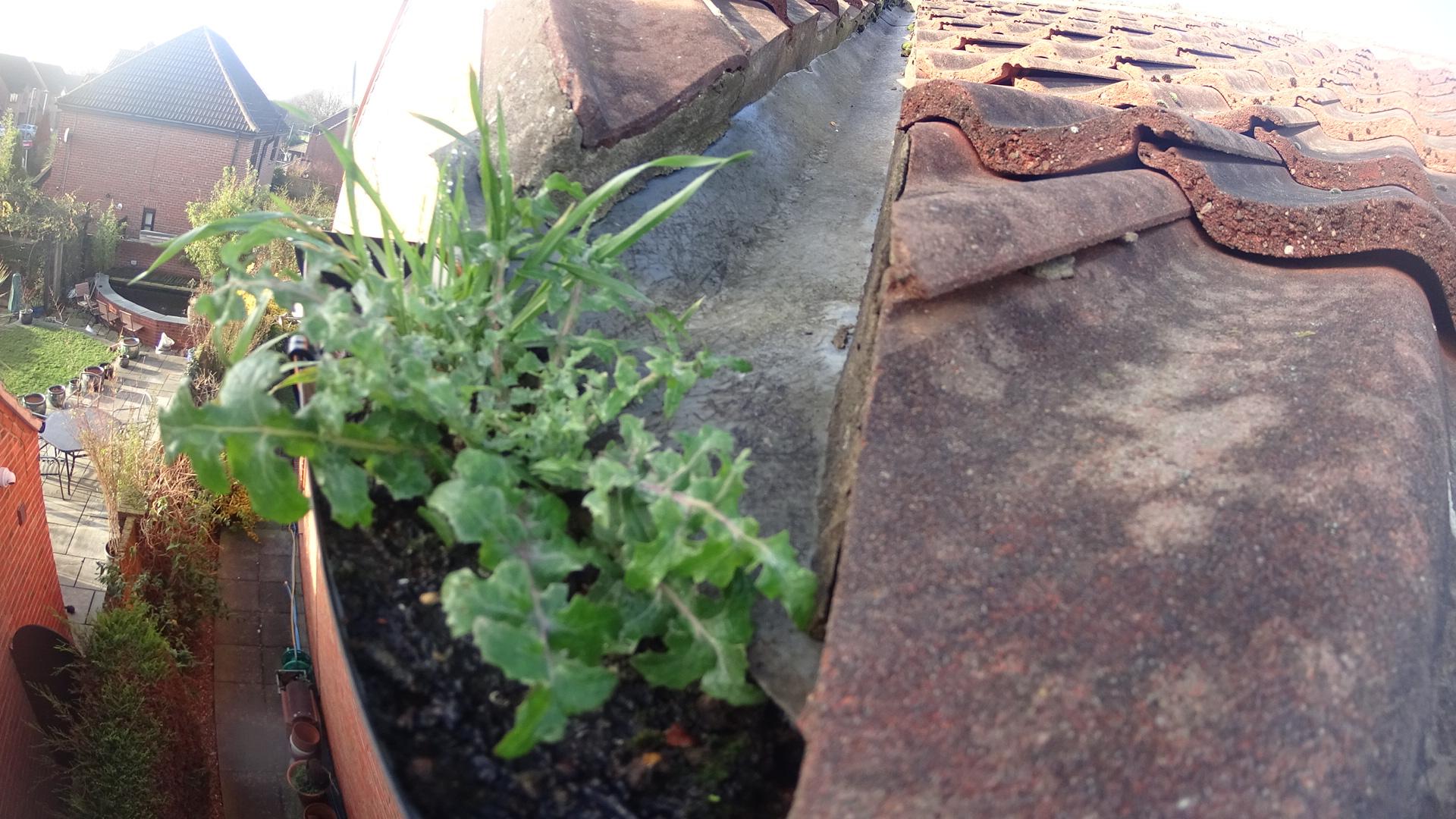 Gutter Weeds In Selby In February Gutterpro