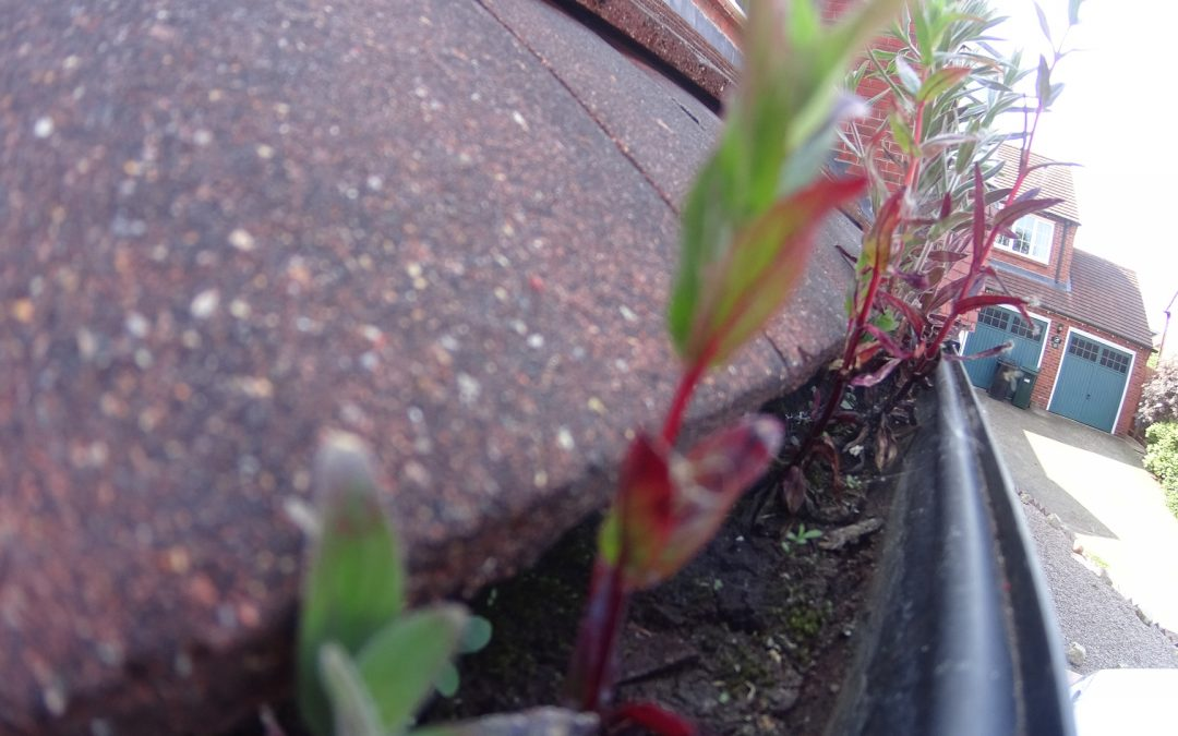 Gutter Cleaning Perton